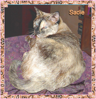 "Sadie is Aimee's tortoise shell cat. Casually known around the house as ""Lil' Gal,"" Sadie shares Aimee's passion for northern New Mexico bird-watching. Between naps she enjoys taking a stroll through whatever craft project is currently on the work table."
