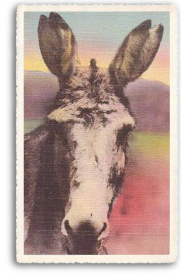 "A closeup portrait of one of the most beloved farm animals still found in and around Taos, New Mexico: the burro (or donkey). This one happens to be the Taos Unlimited ""Talking Burro""!"